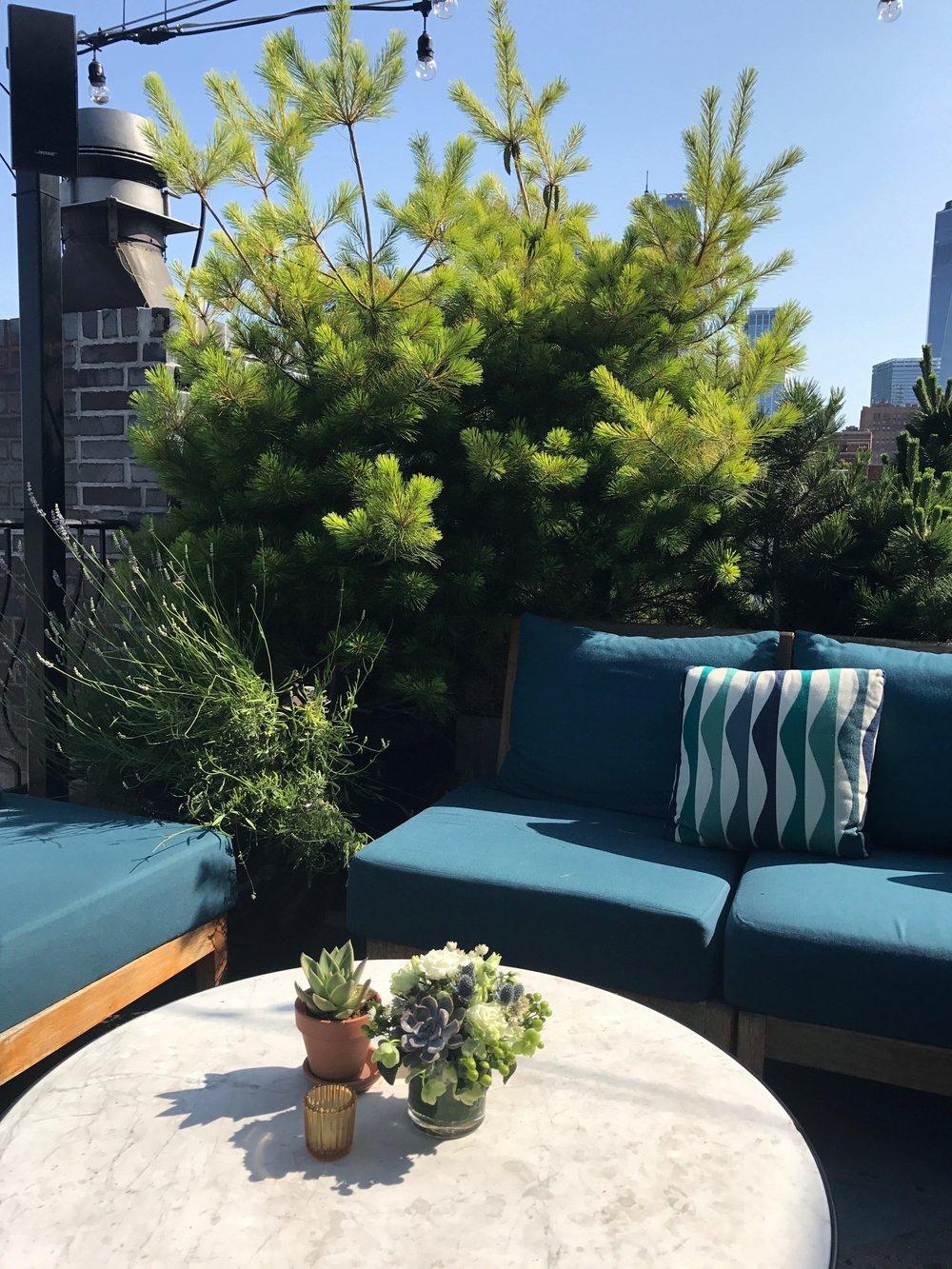 Ironshore Succulent Arrangements- B Floral