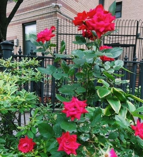 Greenwich Village Flowers - B Floral