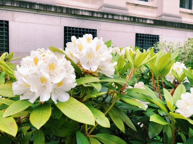 Columbia University Flowers - B Floral