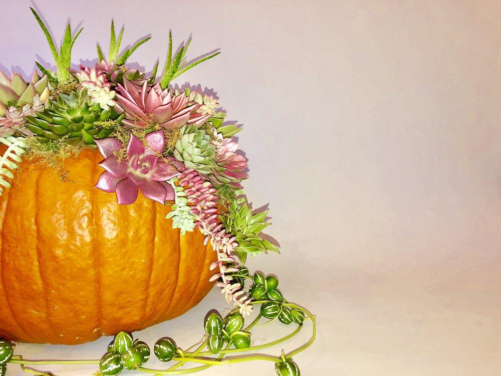 Succulent Pumpkin - B Floral NYC