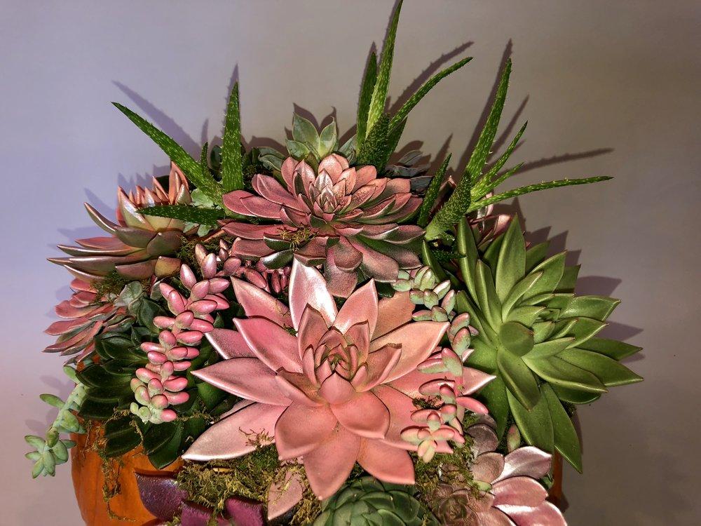 DIY Succulent Pumpkin - B Floral