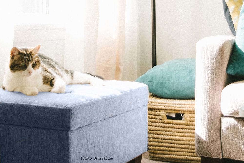 kid-friendly-living-room-ideas-blog-online-kids-interiors-nathan-fertig.jpg