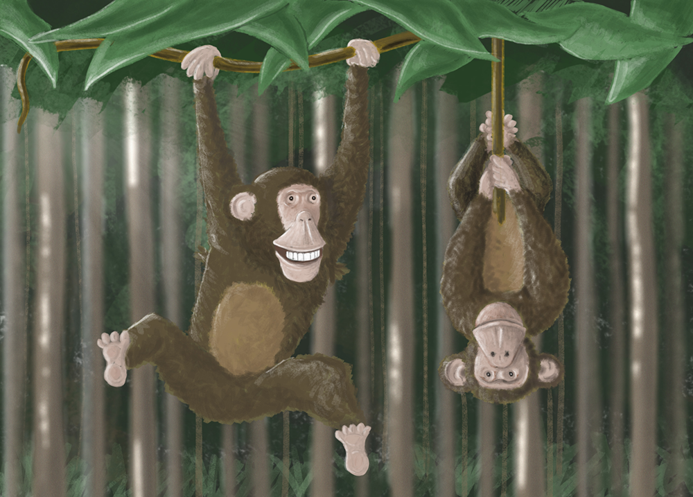 monkeys_illustration_tmk graphics_perth