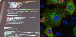 Bioimage     An    alysis    We provide a full range of image analysis support for research studies within the IGMM.