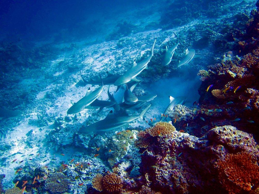 agence-voyage-luxe-oceanie (7).jpg