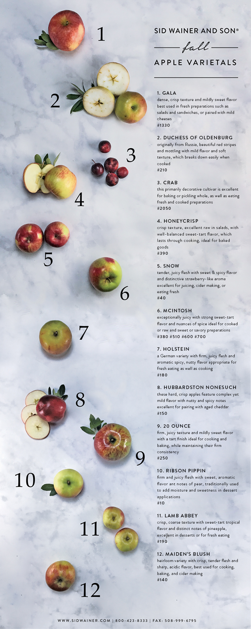 Fall Apples_Infographic.jpg