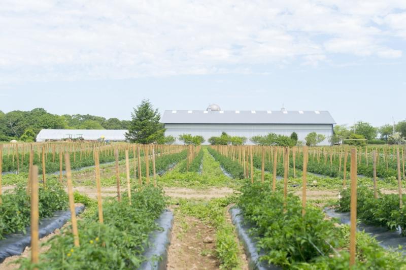 Exterior Metal Barn & Crops.jpg