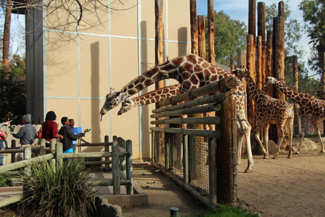 Fresno Chaffee Zoo Merced County Events