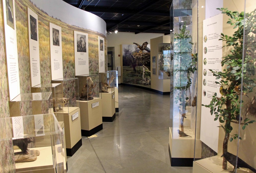 Birds and Small Mammals Displaya (1).JPG