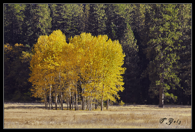 Yosemite-Fall-Colors-04.jpg