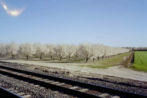 Soon, blossoms will appear on may orchards as springtime nature takes hold in the Central Valley.  Photo by Steve Newvine