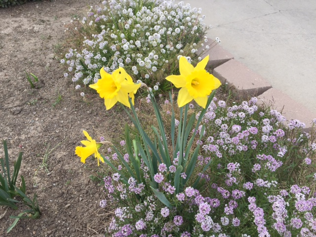 The first flower of spring, representing hope.  Photo by Steve Newvine