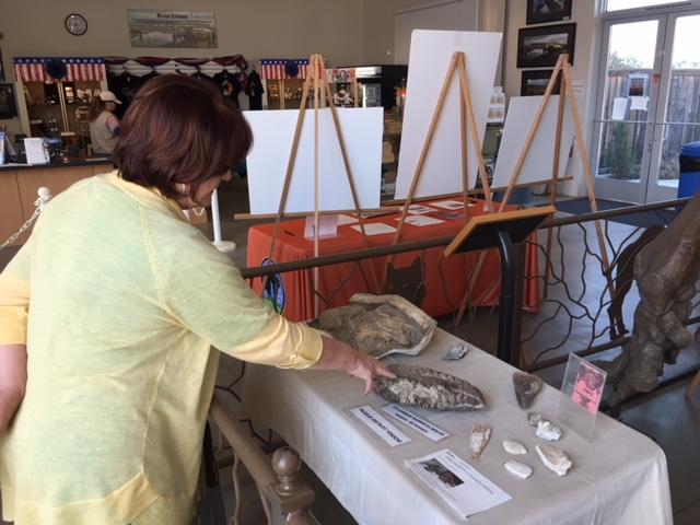 Executive Director Michele Picina looks at some of the exhibits at the Fossil Discovery Center. Photo: Steve Newvine