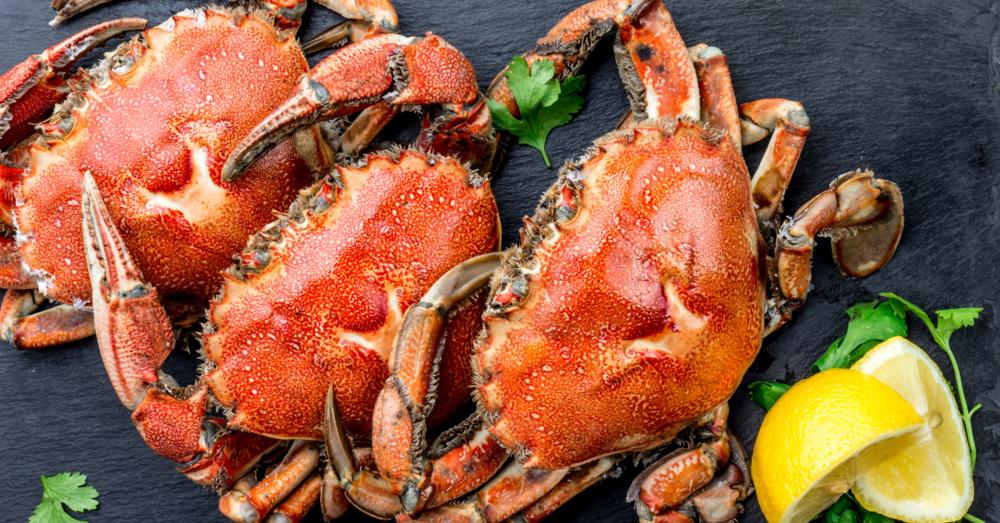 crabfeed.png