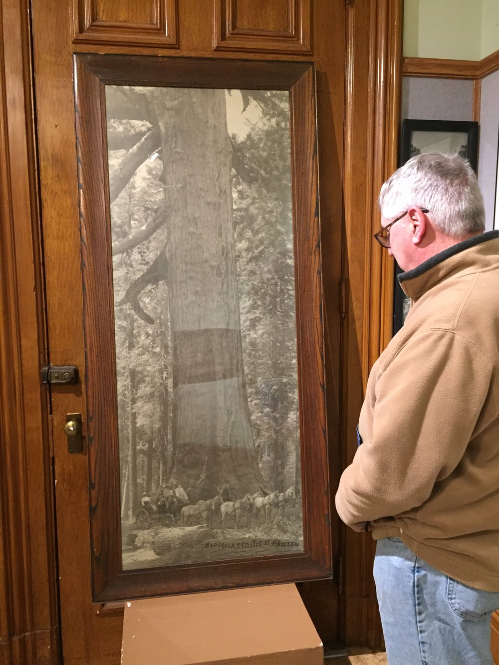 Steve Newvine views a large framed photograph from Yosemite at the Courthouse Museum Exhibit The Originals of Yosemite. Photo: Donna Lee Hartman.