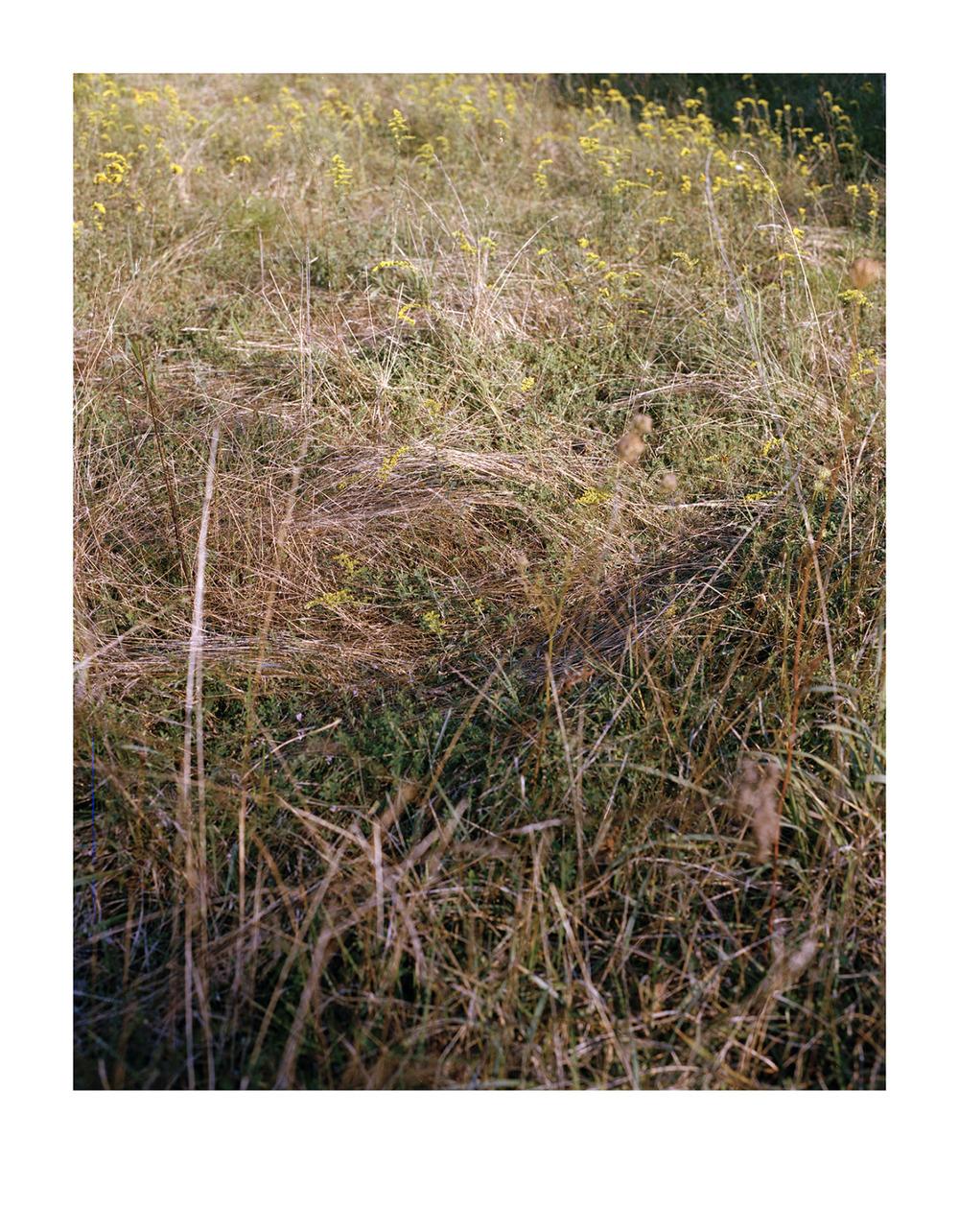 deer bed/borrowed resting place
