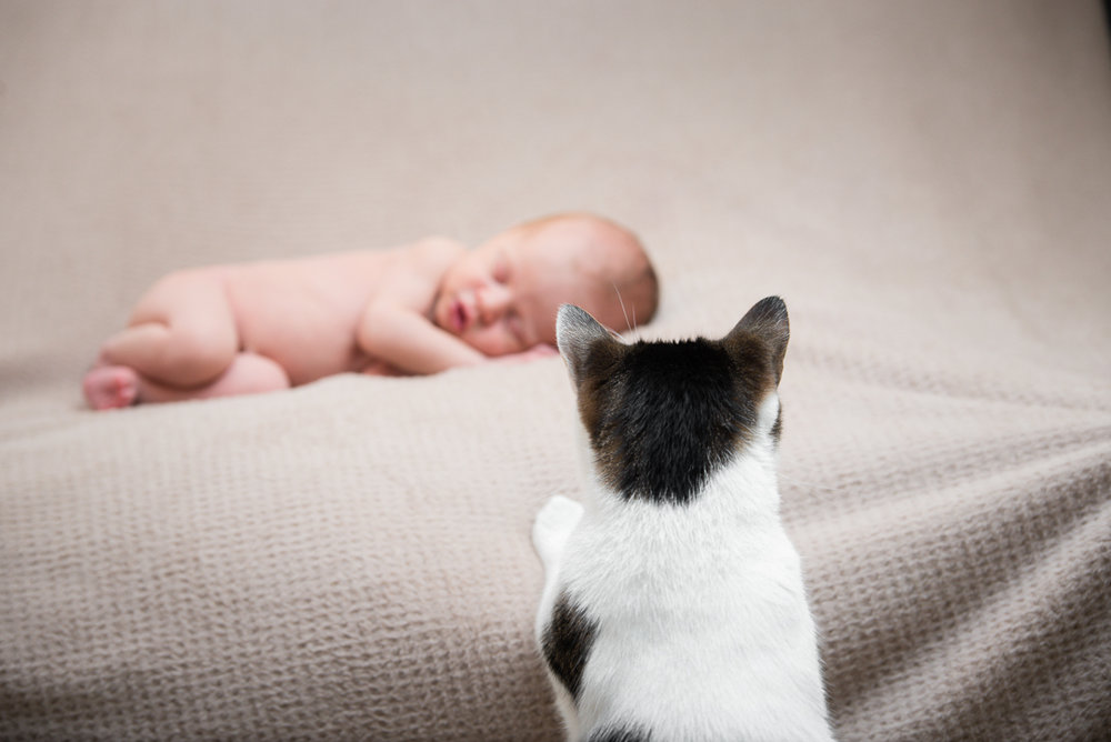 15Naomi Lucienne Photography - Newborn - 170526.jpg