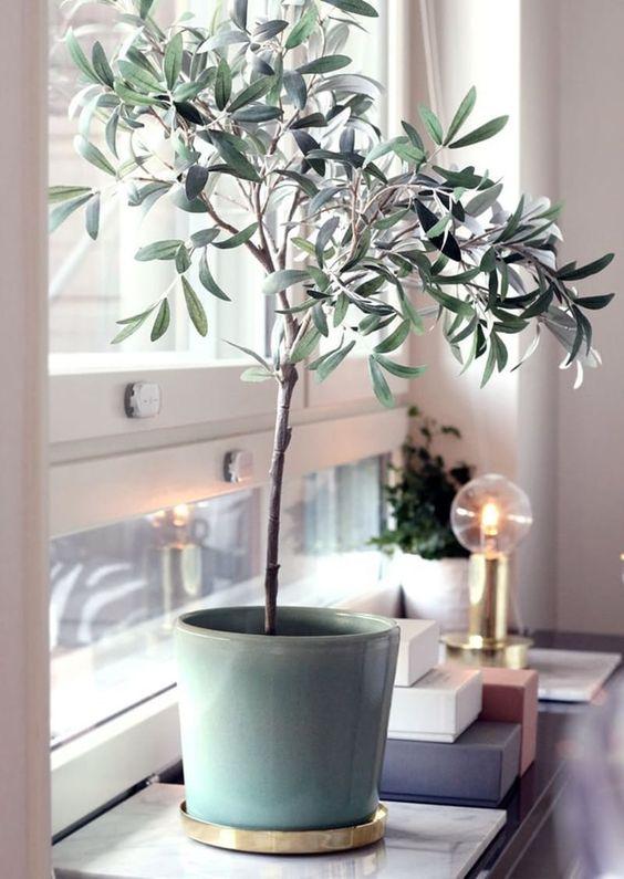 olive 4.jpg