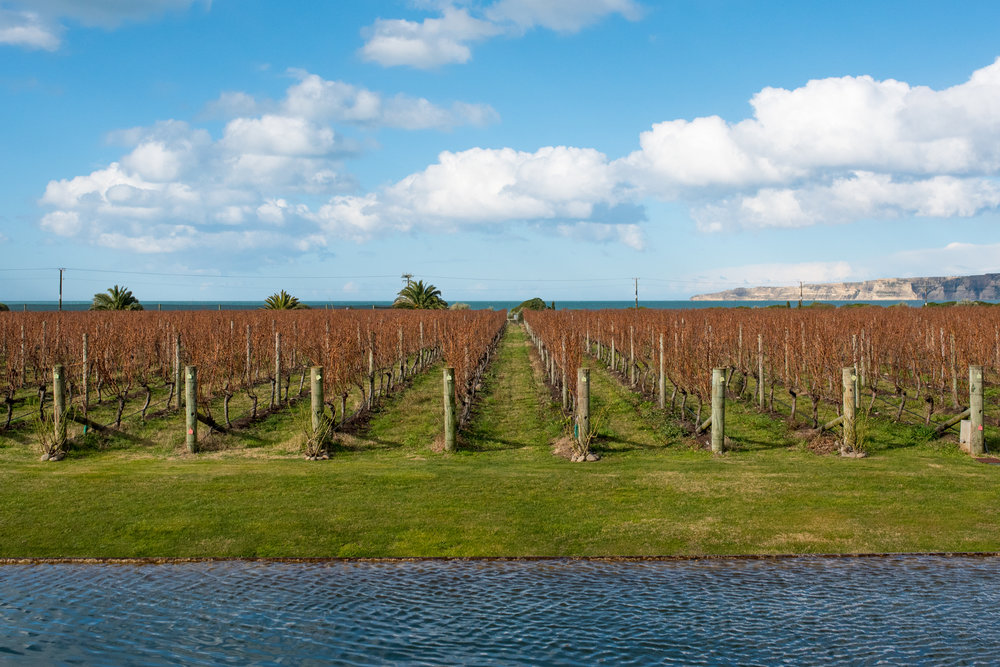 Elephant Hill Vineyard, Te Awanga coast, Hawkes Bay