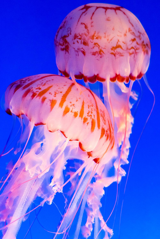 Monterey Aquarium, CA