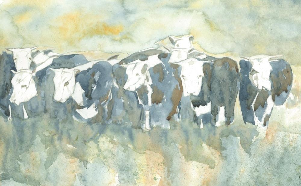 (F) Kleinshmidt Cattle