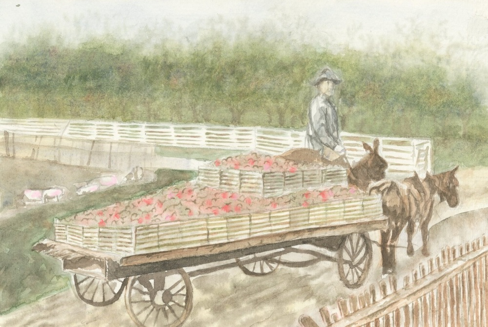 (L) Orchard