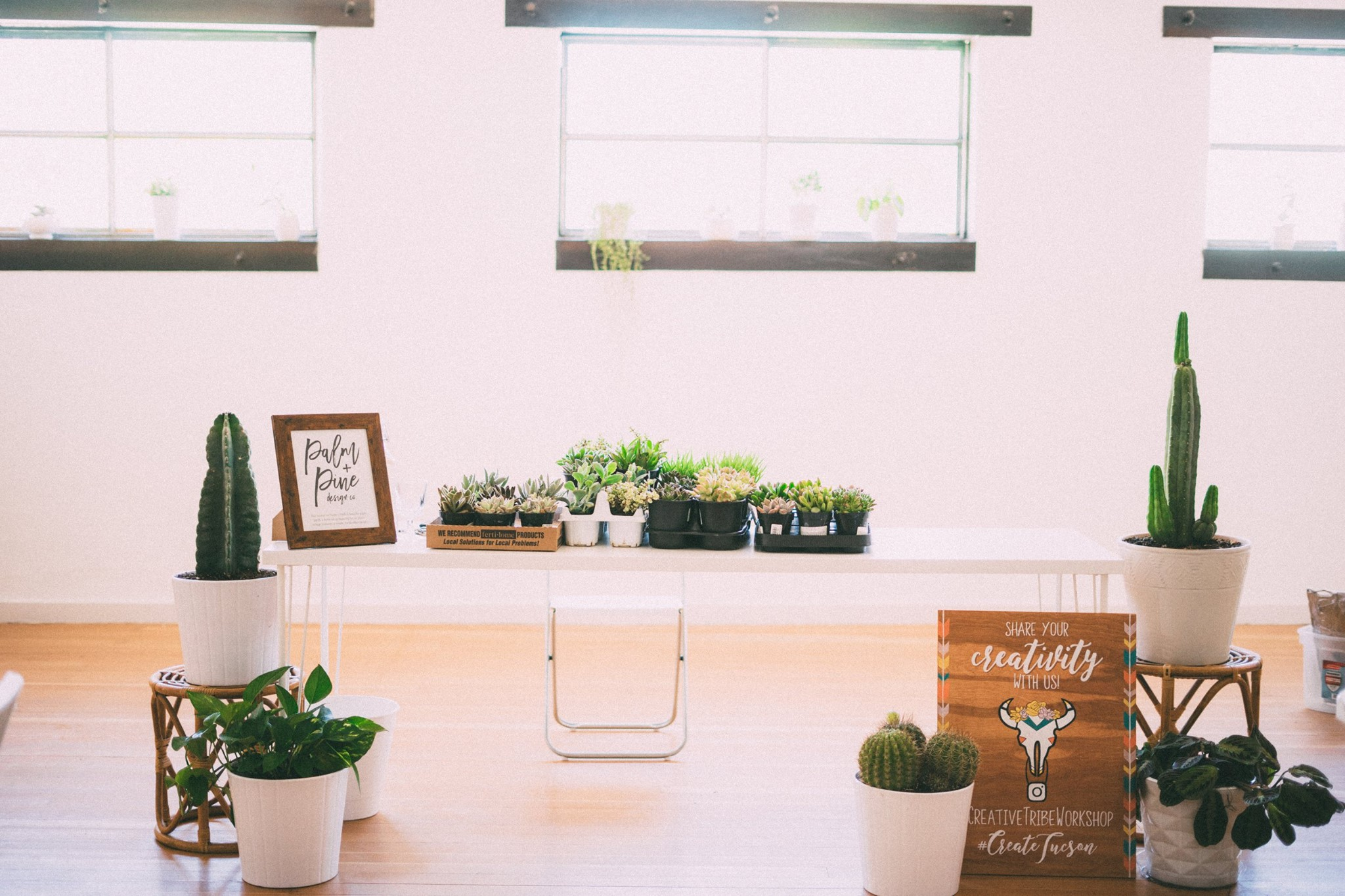 As Kalyn and the CT team prepared for our Succulent & Air Plant Terrarium  workshop, our studio was transformed into a lush green space.