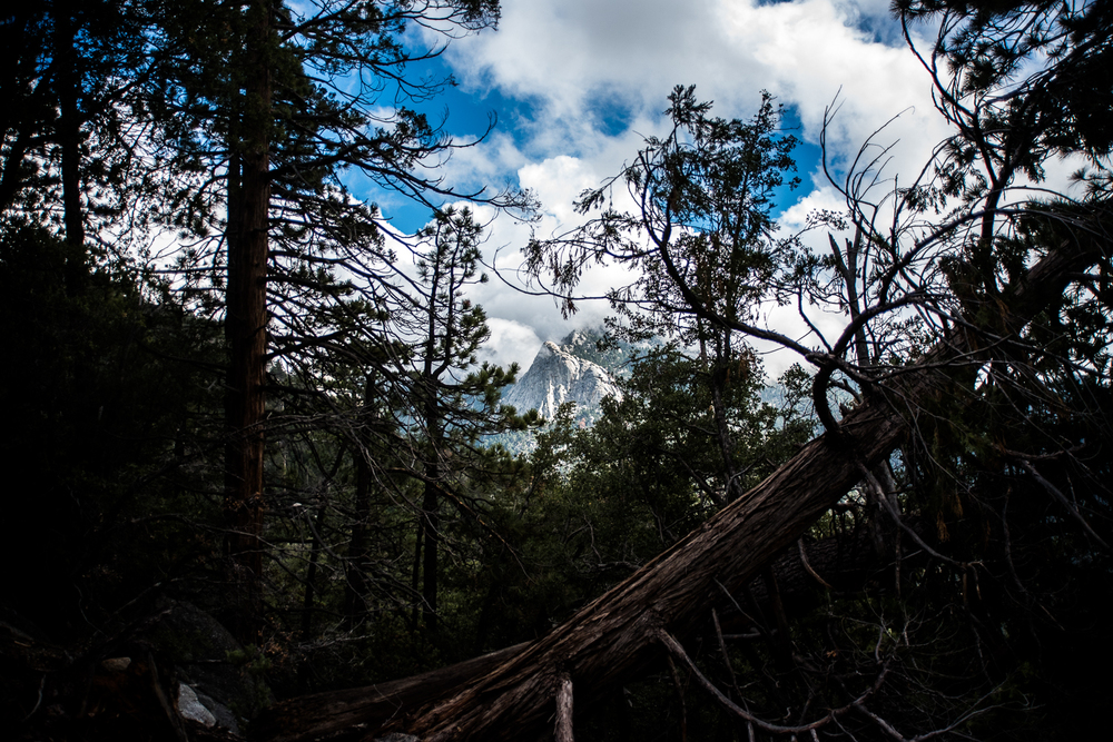 Tahquitz through the forest