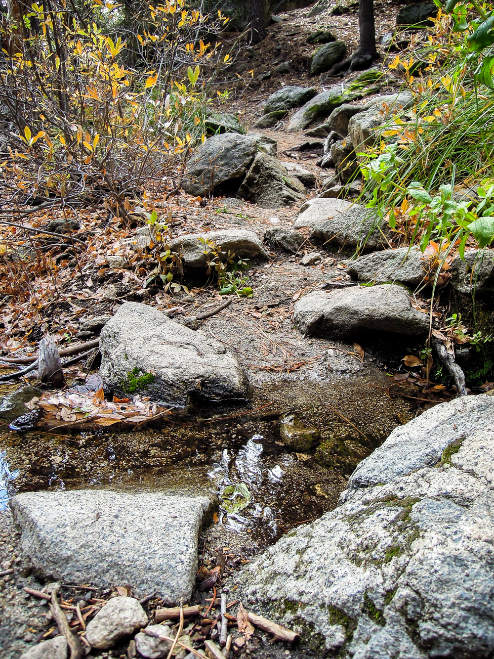 Small creek we had to cross on the 1 mile portion out to Suicide Rock