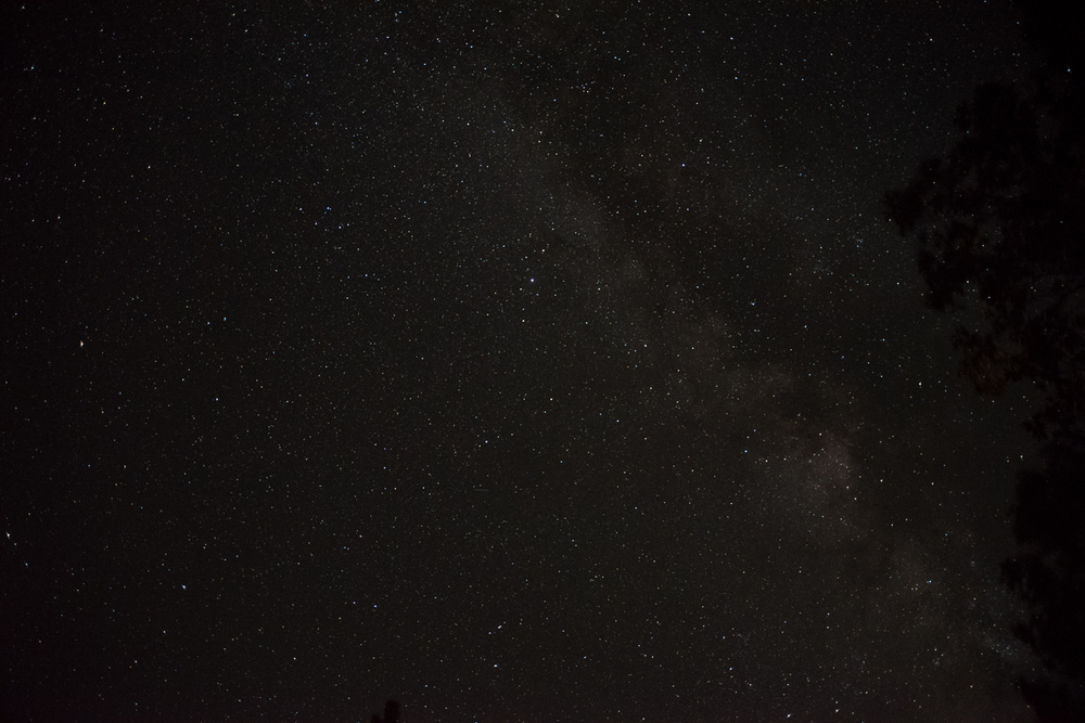 sequoia_2.jpg