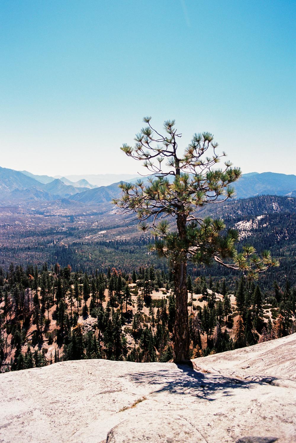 sequoia_4.jpg