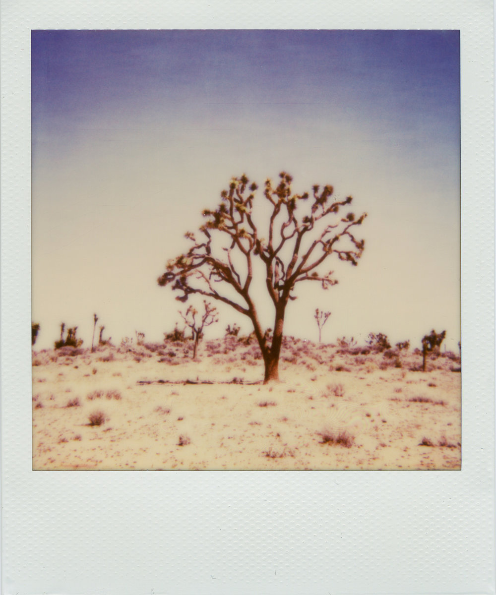 Instant - Polaroid Rainbow - Impossible Film