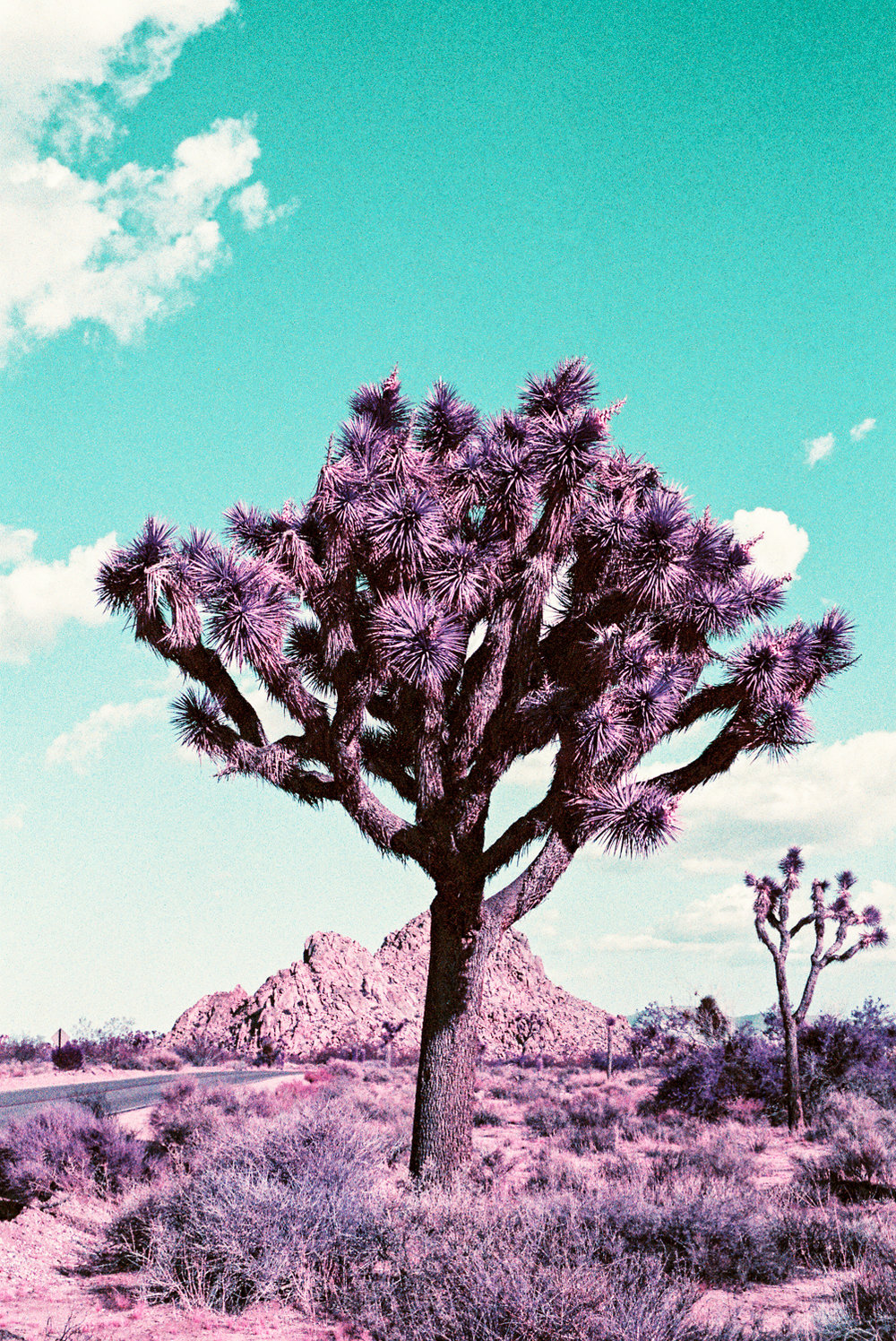 35mm - Nikon F100 - Lomography PurpleChrome