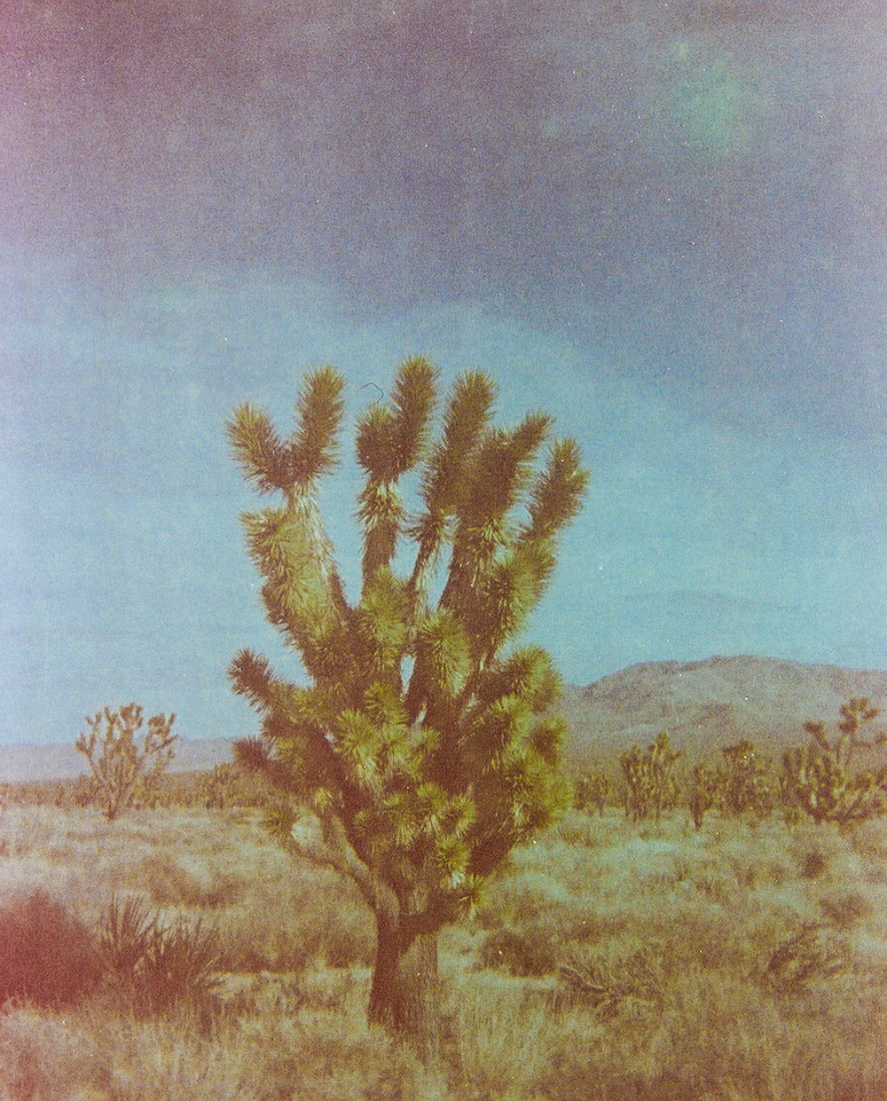 110 Film - Kodak Instamatic - 20 year old Kodak Gold