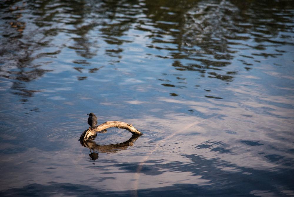 Manzanita Lake 06.jpg