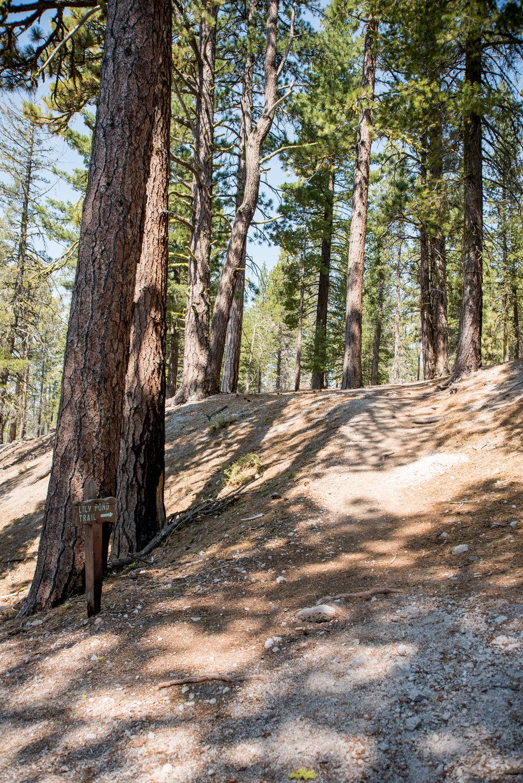 Lily Pond Trail 01.jpg