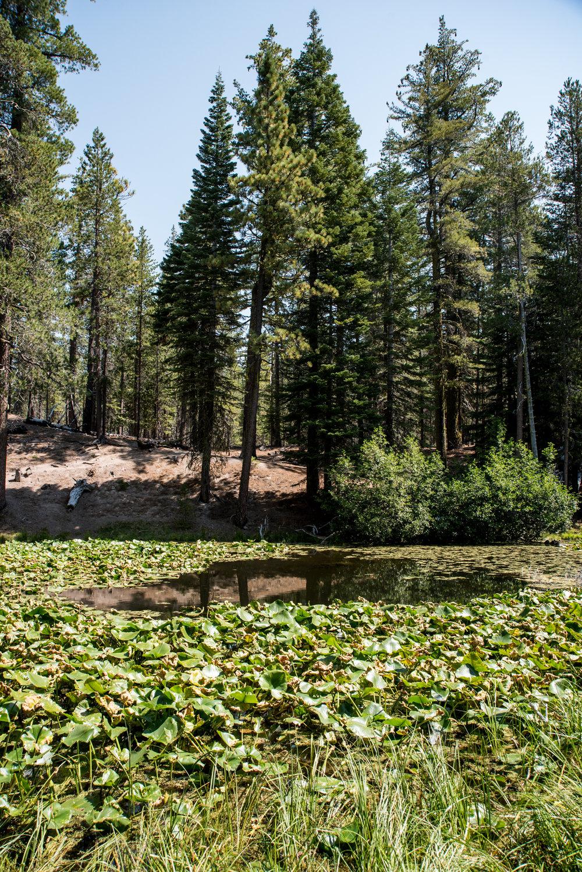 Lily Pond Trail 03.jpg
