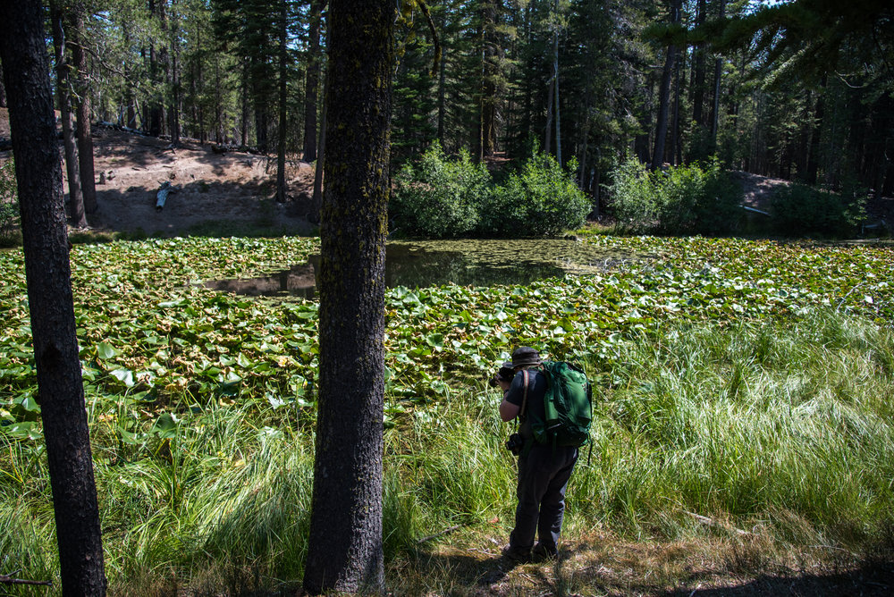 Lily Pond Trail 05.jpg
