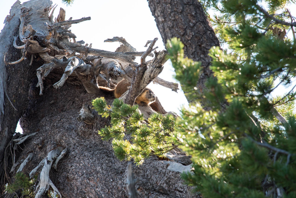 Garfield Peak 37.jpg