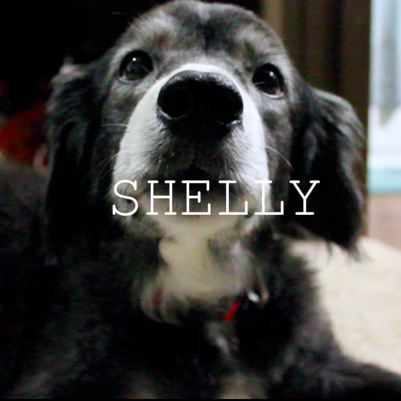 Tribute to Shelly