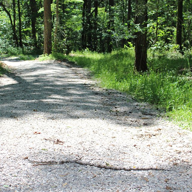 Sometimes you gotta share the trail.  #roadtripdad #critter_wrangling #grayratsnake #wildlife #ruffnermountain #wetlandstrail #buckeyetrail #🐍❤️ #hikealabama #alabamahikes #bhamoutdoors #instagramBham #explorealabama #roadtripalabama #alabamathebeautiful