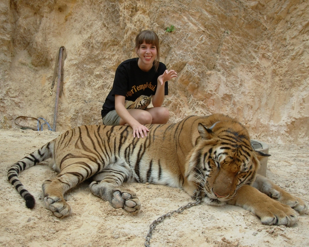 At the Tiger Temple outside of Bangkok, Thailand