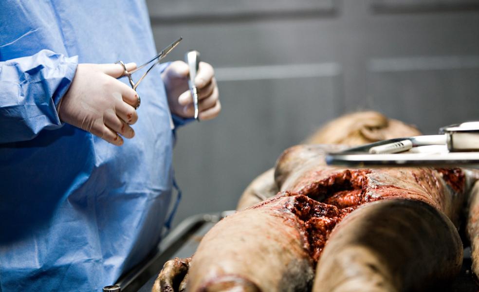 autopsy crop.jpg