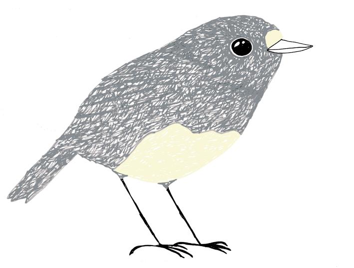 grey-robin