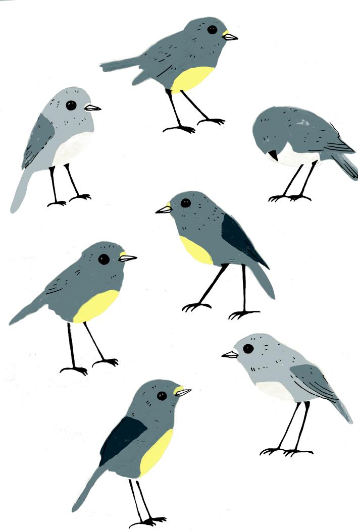 robin-pattern