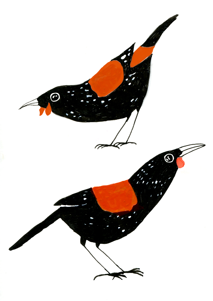 saddlebacks drawing