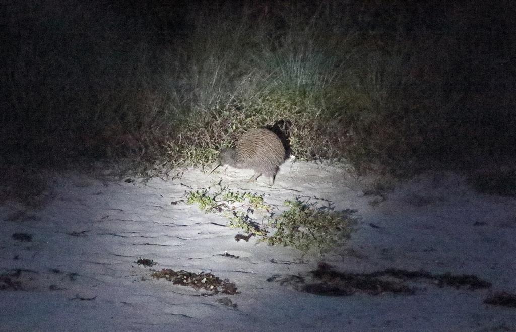 8 kiwi night 2