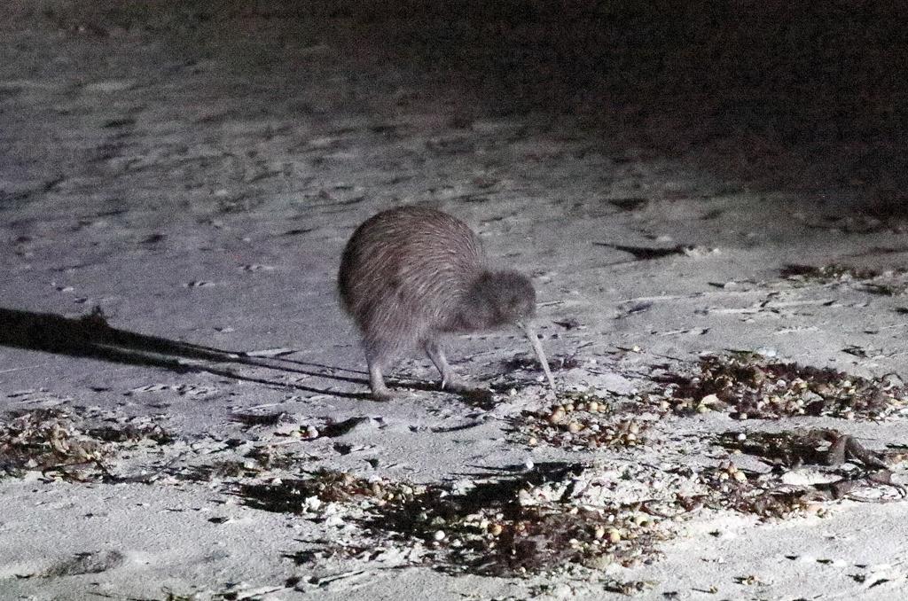9 kiwi night