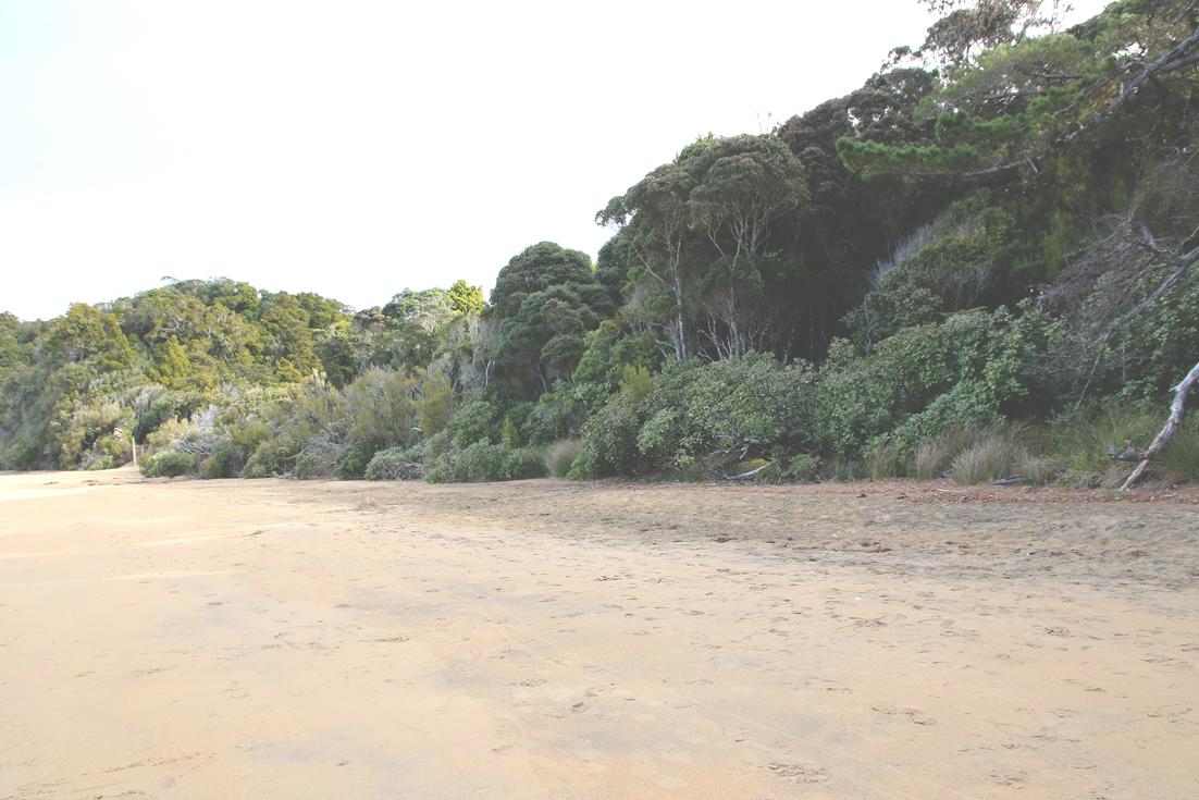 3 beach trees