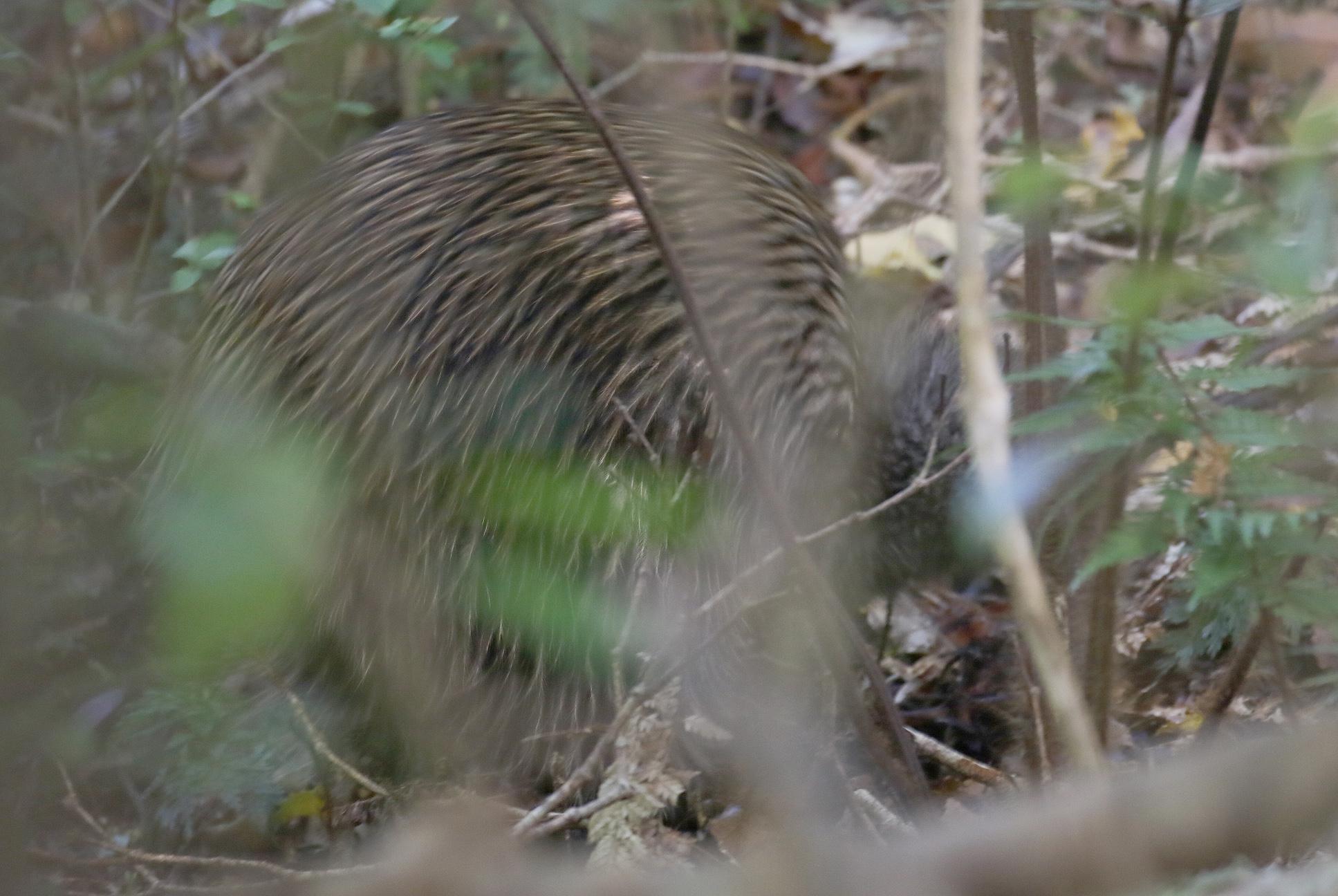 12 bad kiwi photo